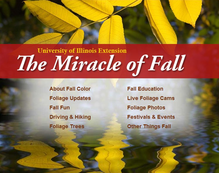 Miracle of Fall