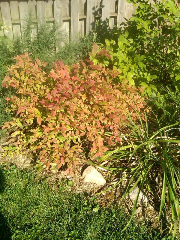 fall color in illinois illinois state climatologist