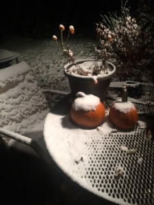 snow-nov17-2014-small